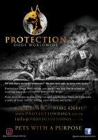 protectiondogsworldwide.jpg