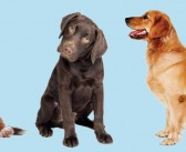 Pets With Amazing Abilities…